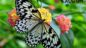 Kelebekler Kaç Gün Yaşar?