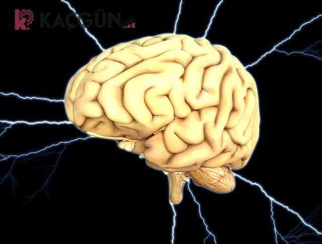 Beyin Ölümü Gerçekleşen Hasta Kaç Gün Yaşar?