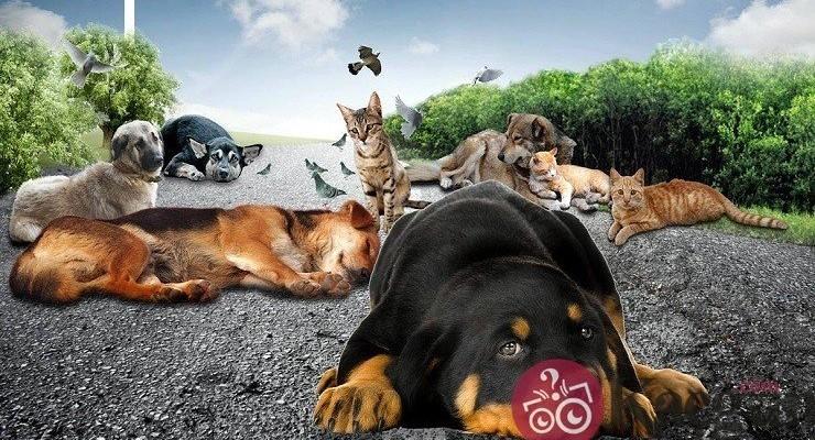 Hayvanları Koruma Günü Ne Zaman?