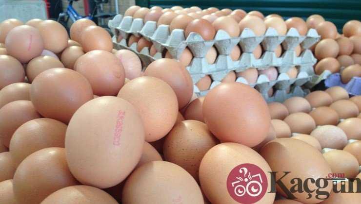 Yumurtaların Üzerindeki Kodlar Ne Anlama Gelir?